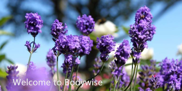 Welcome to Bodywise Yoga and Natural Health